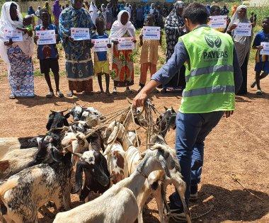 Paylaş'tan Burkina Faso' da süt keçisi dağıtımı